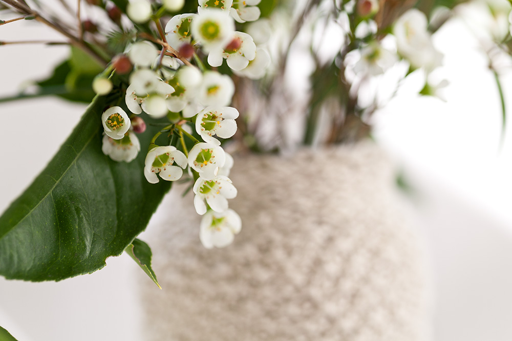 Waxflower in vase